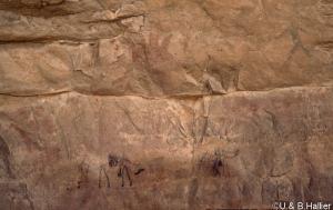 Mouflon-girafe abri  3