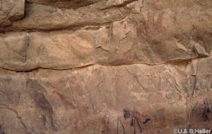 Mouflon-girafe abri  6